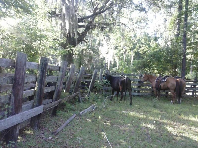 Chazzcreations Shaw Farmsalachua County Floridaold